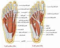 علت درد پا چیست؟